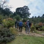 Le jardin japonais de Francis